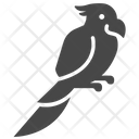 Bird Cockatoo Parrot Icon