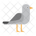 Bird Sea Fly Icon