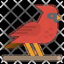 Bird Cardinal Zoo Icon
