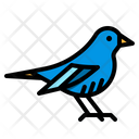 Bird Tags Pet Icon