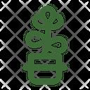 Baby Jade Jade Plant Crassula Ovata Icon