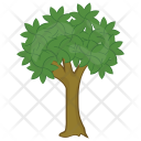 Bitter nut Hickory Icon