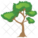 Bitter nut Hickory Tree Icon
