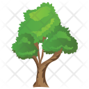 Bitternut Hickory Tree Icon