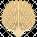 Bivalve Mollusks Clam Sea Shell Icon