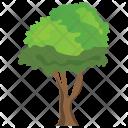 Black Ash Fraxinus Icon
