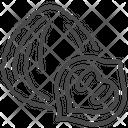 Black Walgrains Juglans Nigra Seed Icon