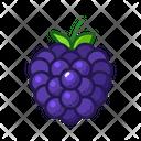 Blackberry Fruits Fruite Icon