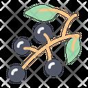Blackcurrant Icon