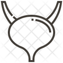 Bladder Human Body Icon