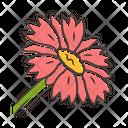 Blanket Flower Blanket Gaillardia Icon