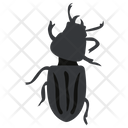 Blister Beetle Insect Scarab Beetle Icon