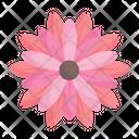 Blossom Lotus Flower Icon