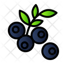 Blue Berry Icon