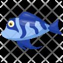 Blue cichlid fish Icon