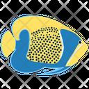 Blue Girdled Angelfish Icon