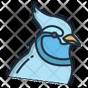 Blue Jay Birds Bird Icon