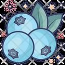 Blueberries Chokeberries Healthy Berries Icon