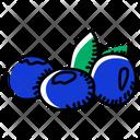 Fruit Blueberries Berries Icon
