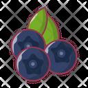 Blueberry Fruit Food Icon