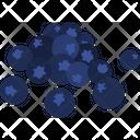 Blueberry Bilberry High Bush Icon