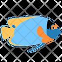 Blueface Angelfish Icon