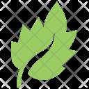 Bolleana Poplar Leaf Icon