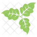 Bolleana Poplar Leaves Icon