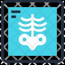 Bones Diagnostic Medicine Icon