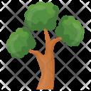Bonsai Pine Icon