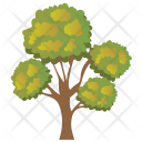 Bonsai Tree Icon