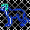 Border Collie Wild Dog Dachshund Icon