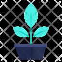 Botany Plant Pot Icon