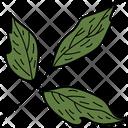 Box Elder Leaf Icon