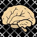 Brain Human Organ Mind Icon