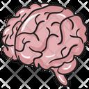 Brain Cerebrum Intelligence Icon