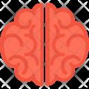 Brain Human Organ Icon