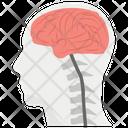 Brain Anatomy Internal Organ Brain Structure Icon