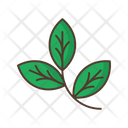 Branch Leafage Icon