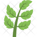 Branch Leaves Leaf Icon
