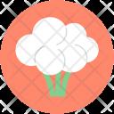 Brassicaceae Icon