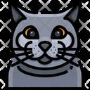 British Shorthair Cat Cat Face Icon