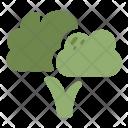 Broccoli Vegetable Healthy Icon