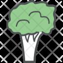 Broccoli Vegetable Food Icon