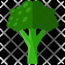 Broccoli Vegetable Icon