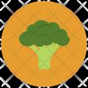 Brocolli Food Healthy Icon