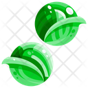 Brussel Sprout Vegetable Organic Icon