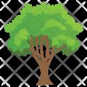 Growing Columnar Buckthorn Icon