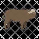 Buffalo Animal Cow Icon