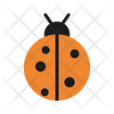 Bug Beatle Insect Icon